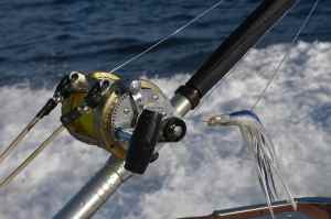 Only top quality Shimano tackle is used