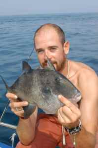 ONE OF MANY TRIGGER FISH