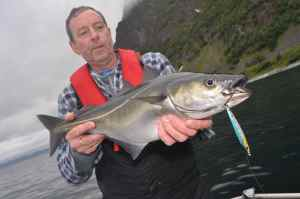 Coalfish, fantastic sport on light spinning tackle