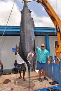 I'll never need to lie about my biggest fish again; 1,120lb Atlantic Blue Marlin