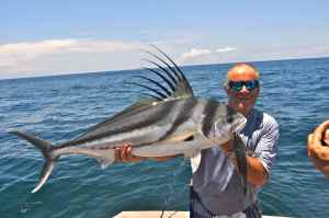 Panamanian roosterfish, one of the many species of sport fish we will be targeting