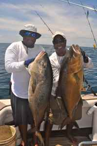 A brace of big Panamanian amberjacks