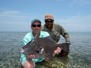 Terry's triggerfish