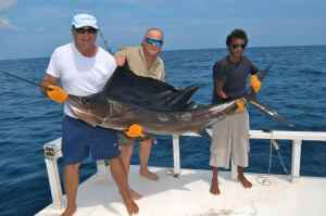 Sailfish are prolific in The Maldives