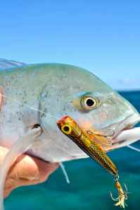 There are plenty of trevally, too, such as this small bluefin caught on a Rapala Skitterpop