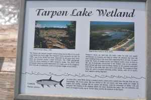 Tarpon Lake is an amazing place to fish. Full of 5-15lb tarpon that following a hurricane have become land locked, its a fantastic place to catch tarpon on the fly