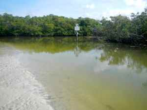 The inner reaches of Clam Pass, classic snook country