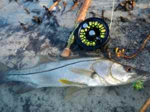 Snook caught on fly using my Bug Eyed Bunny