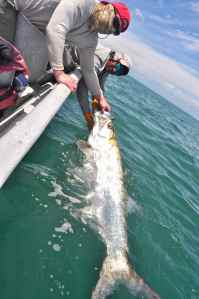 One of many good tarpon caught by Jim Butler