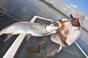 50lb tarpon caught on light spinning outfit in Lake San Juan Negro