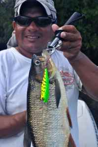 A good machaca caught on Rapala Skitter Pop