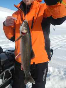 Arctic Char caught through the ice
