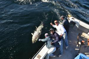 Another PEI monster is brought to the boat. All Canadian bluefin are released