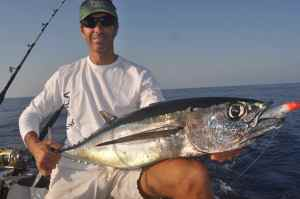 Albacore caught off Javea