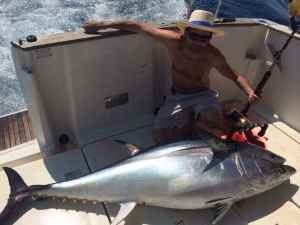 Another big Spanish bluefin