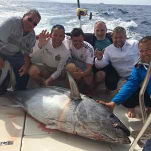 A big Spanish bluefin tuna