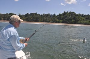 Ray fights a good rooster off Coiba Island.