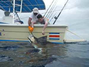 Luke preparing to release a nice Pacific sailfish.