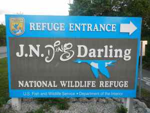 Few areas are easier to access and fish as the J.N.Ding Darling National Wildlife Refuge on Sanibel Island.