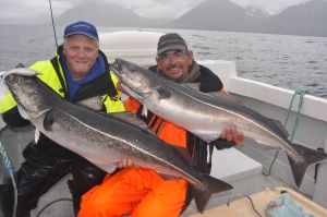 A brace of 35lb+ Icelandic coalfish, note the Storm Ultra Shad in the mouth of my fish.