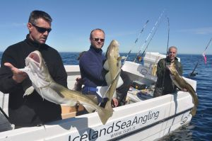 The boats fish four anglers in absolute comfort, and as many as five or six.
