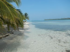 Tropical paradise, just one of countless white sand beaches you'll find in the San Blas Islands.