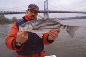 Capt.Joe Shastay with an East River striper
