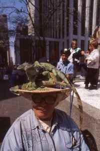 Little old lady with a hat full of live iguana's, only in NYC!