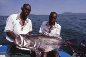 A Lake Victoria Nile perch, fish over 200lb have been caught here