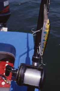 The successful deep diving trolling lure I used for nile perch