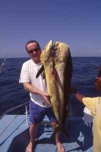 Dorado, 'felusi' in Swahili, are one of many species of gamefish abundant off the Kenyan coast