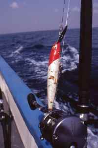 Rapala Magnum CD18 red head worked very well off Freetown, as it does pretty much anywhere else in the world