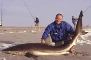 An average sized bronze whaler caught surf fishing in Namibia