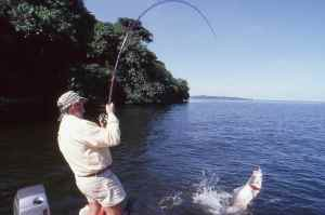John Wilson hooked up to a Nile Perch at The Sesse Islands
